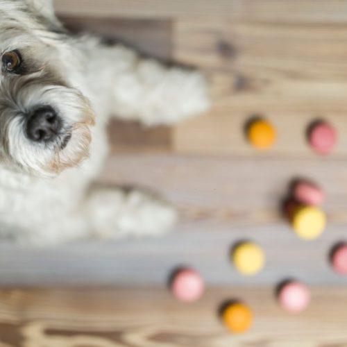 Croquetas para perros