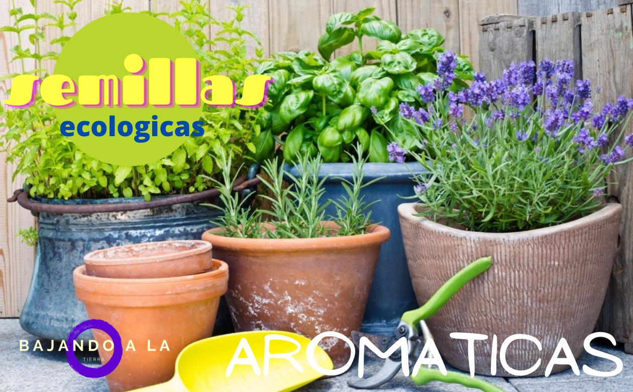 semillas de aromaticas eco