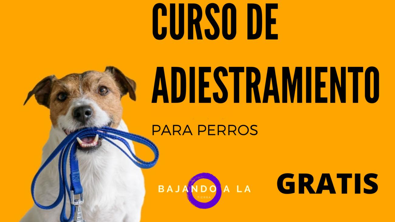 curso gratis adiestrar perros