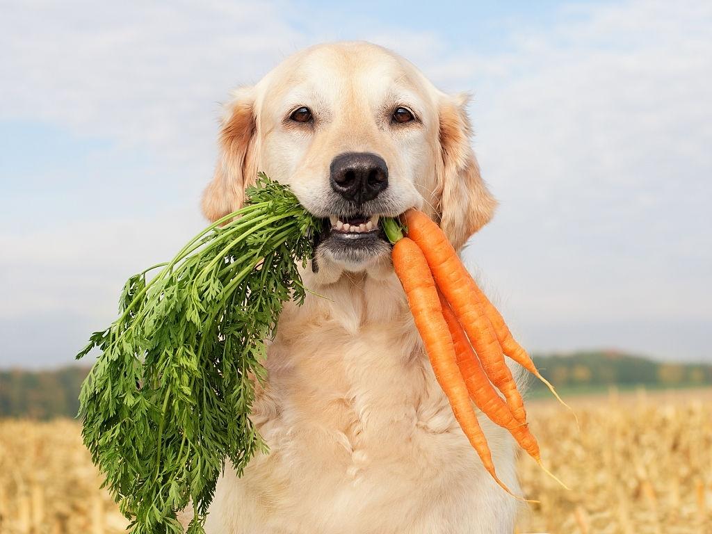 ¿Cómo hacer que tu perro coma verduras?