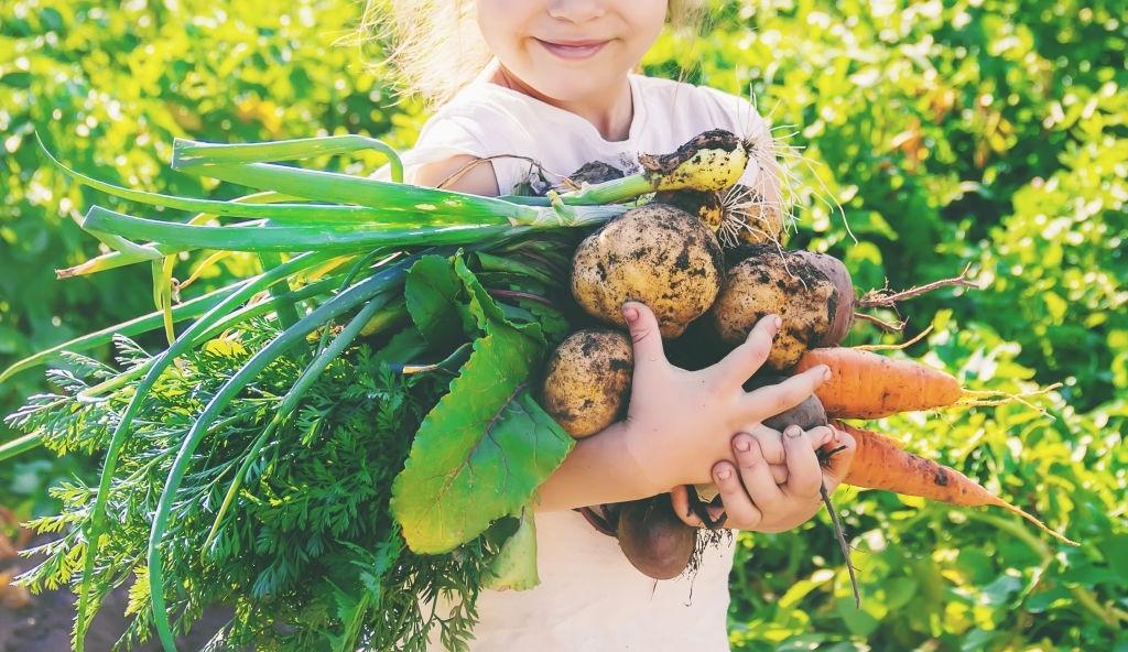 alimento ecológico económico