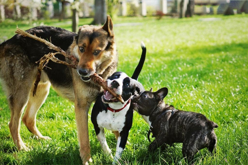 residencial canino sevilla